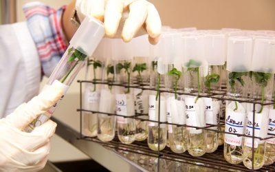 Referência mundial em pesquisa e desenvolvimento de tecnologia para a citricultura