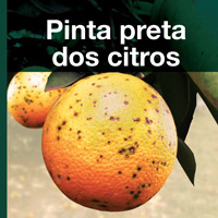 Pinta Preta do Citrus