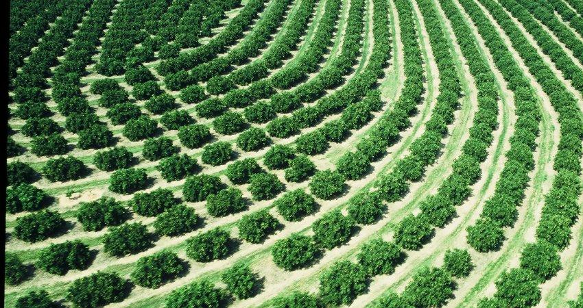 Congresso Internacional terá workshops e palestras sobre irrigação e nutrição