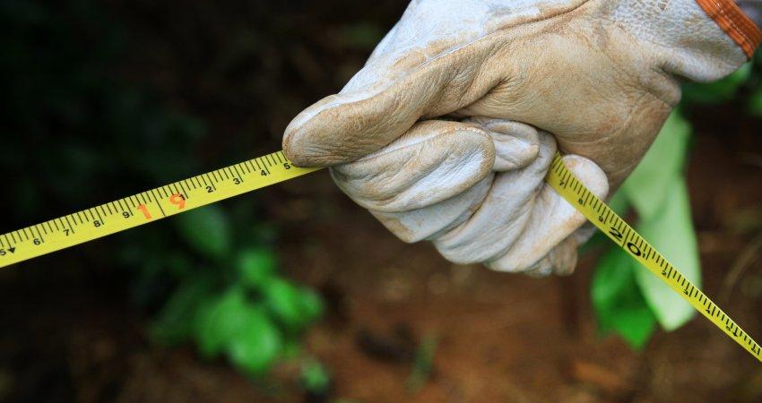 Fundecitrus inicia trabalho de atualização do inventário de árvores do parque citrícola em 8 de setembro