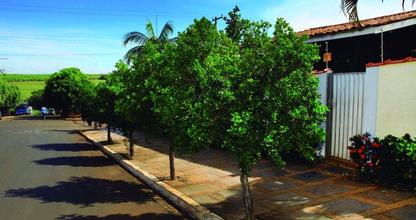 Controle na área urbana é fundamental para evitar avanço do greening na área rural