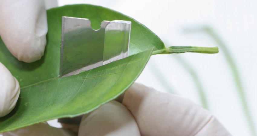 Laboratório do Fundecitrus completa 90 mil diagnósticos de HLB para citricultores