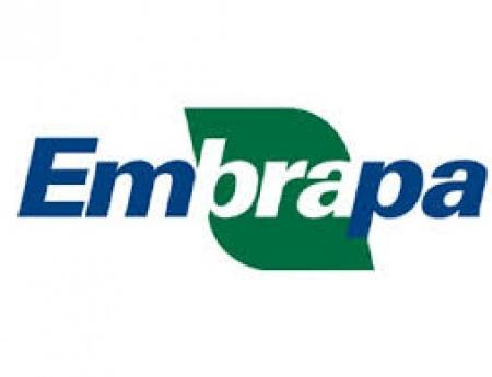 Embrapa e Fundecitrus estudam parceria em pesquisa de greening (HLB)