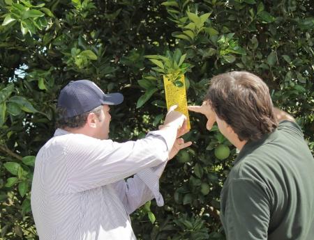 Cobertura do Alerta Fitossanitário atinge 48% do parque citrícola com inclusão das regiões de Frutal e Lins
