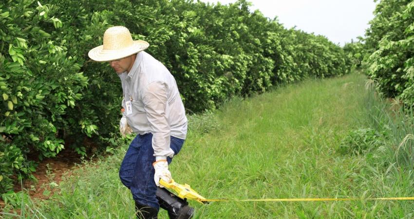 Fundecitrus inicia estimativa da safra de laranja 2017/18
