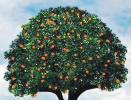 Encontro ressalta a importância da citricultura do Noroeste Paulista