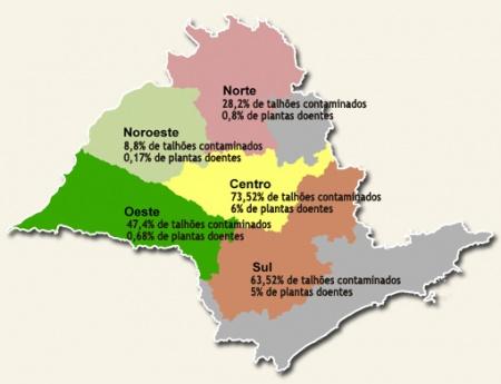 Greening atinge 3,8% das árvores dos pomares paulistas