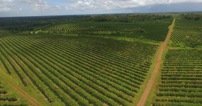 Costa Rica tem 22 mil hectares de citros e tendência de expansão