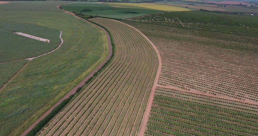 Plantio e manejo diferenciados nas bordas ajudam no controle de greening nos pomares de laranja