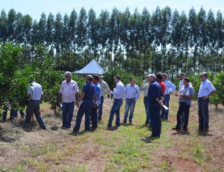 Caravana de citricultores conhece medidas de prevenção e controle de cancro cítrico em experimentos no Paraná