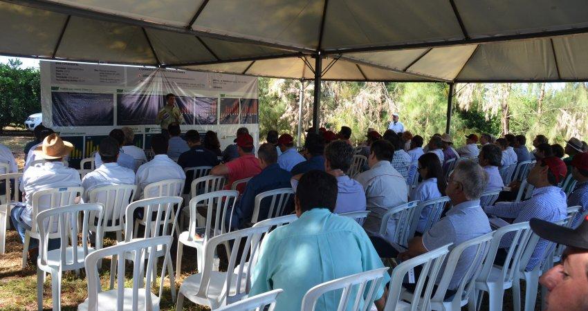 3º Dia de Campo de cancro cítrico reúne cem citricultores em experimento no Paraná