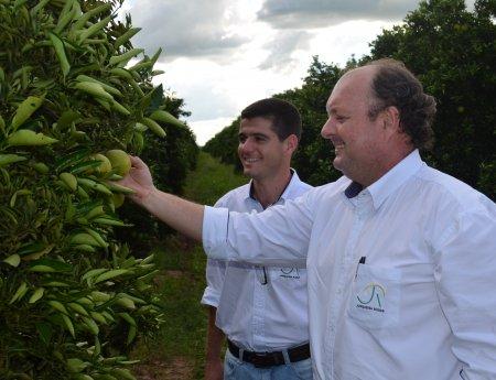 Adoção do pacote de manejo reduz índice de HLB em 73% nas fazendas do grupo Junqueira Rodas