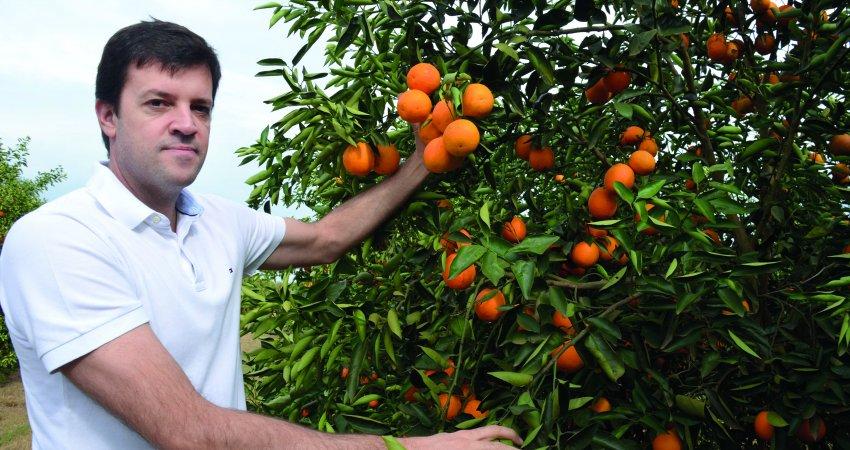 Controle do greening passou a ser mais eficiente depois que citricultor adotou o manejo mais rigoroso nas bordas