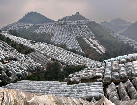 China se moderniza e aprimora manejo do HLB