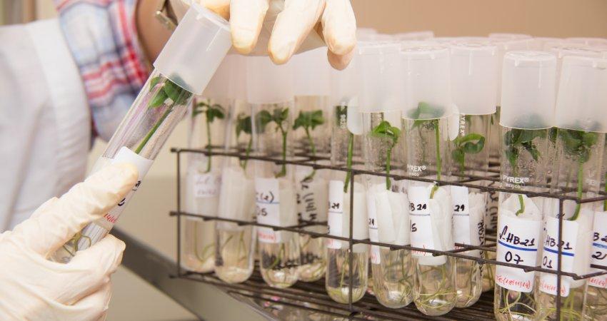 OGMs abrem a programação de workshops no Congresso Internacional de Citricultura