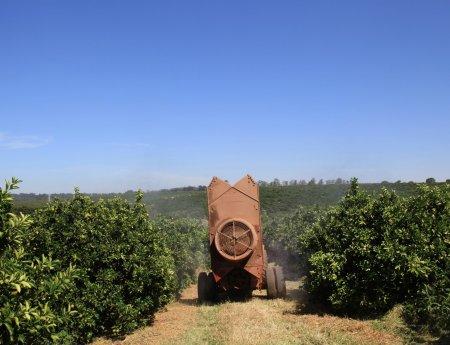 Defensivos seletivos colaboram com manejo sustentável dos pomares