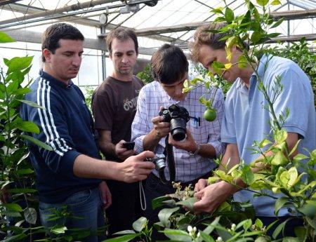Professores de universidade do Paraguai visitam Fundecitrus para conhecer pesquisas sobre greening (HLB)