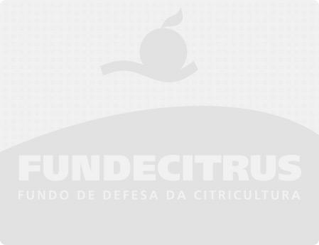 Greening atinge 38,8% dos talhões dos pomares paulistas