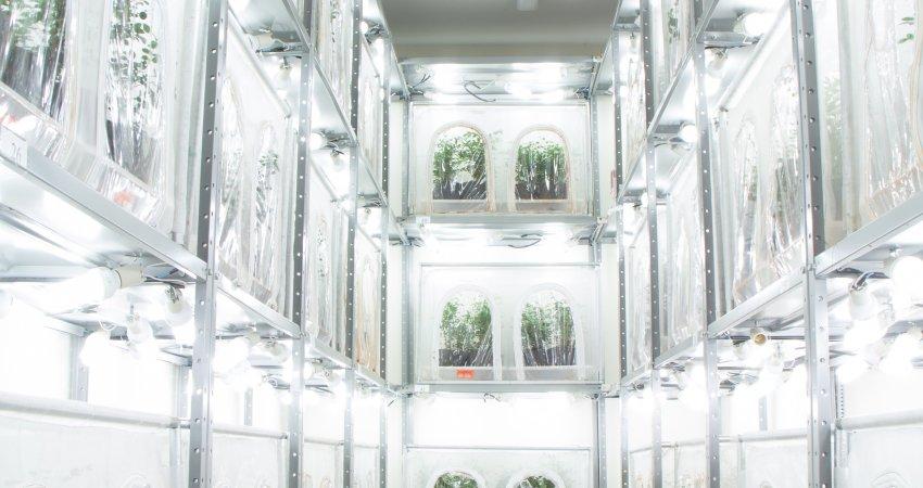 Laboratório de Controle Biológico do Fundecitrus bate recorde na produção mensal de Tamarixia radiata com a criação de 110 mil vespinhas em outubro