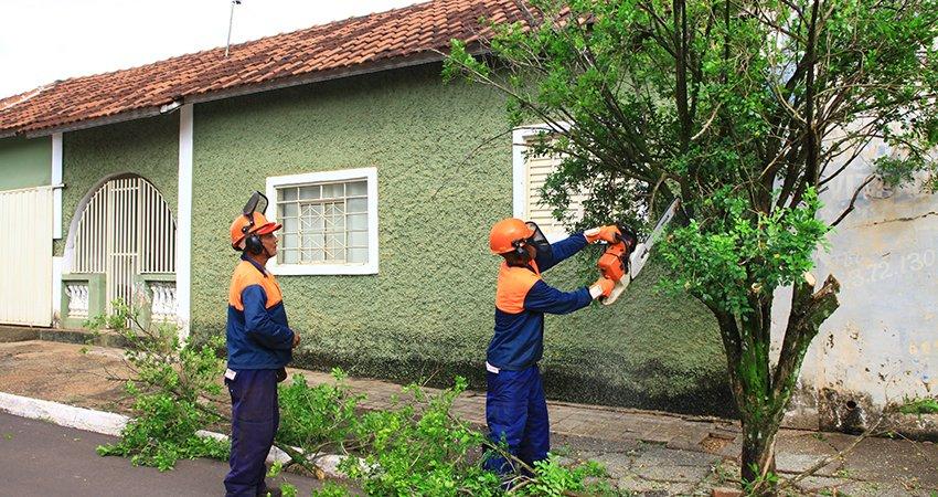 Doze municípios retiram plantas de citros e murta da área urbana para ajudar a diminuir HLB nos pomares