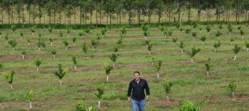 Citricultor transformou área abandonada em pomar produtivo em Guaraci