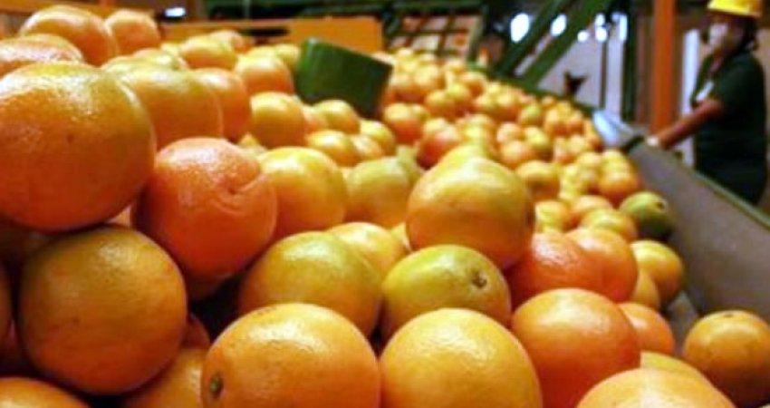 Estimativa de safra de laranja da Flórida cai um milhão de caixas e deve ser de 71 milhões de caixas